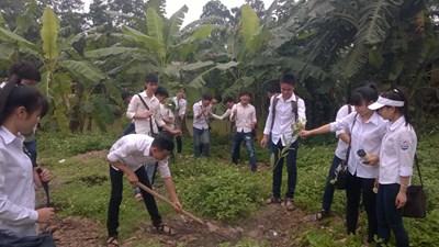 Kế hoạch tổ chức tết trồng cây xuân bính thân
